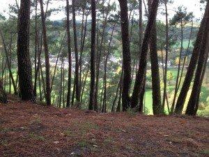 Dans la vallée, Saint Léonard des Bois